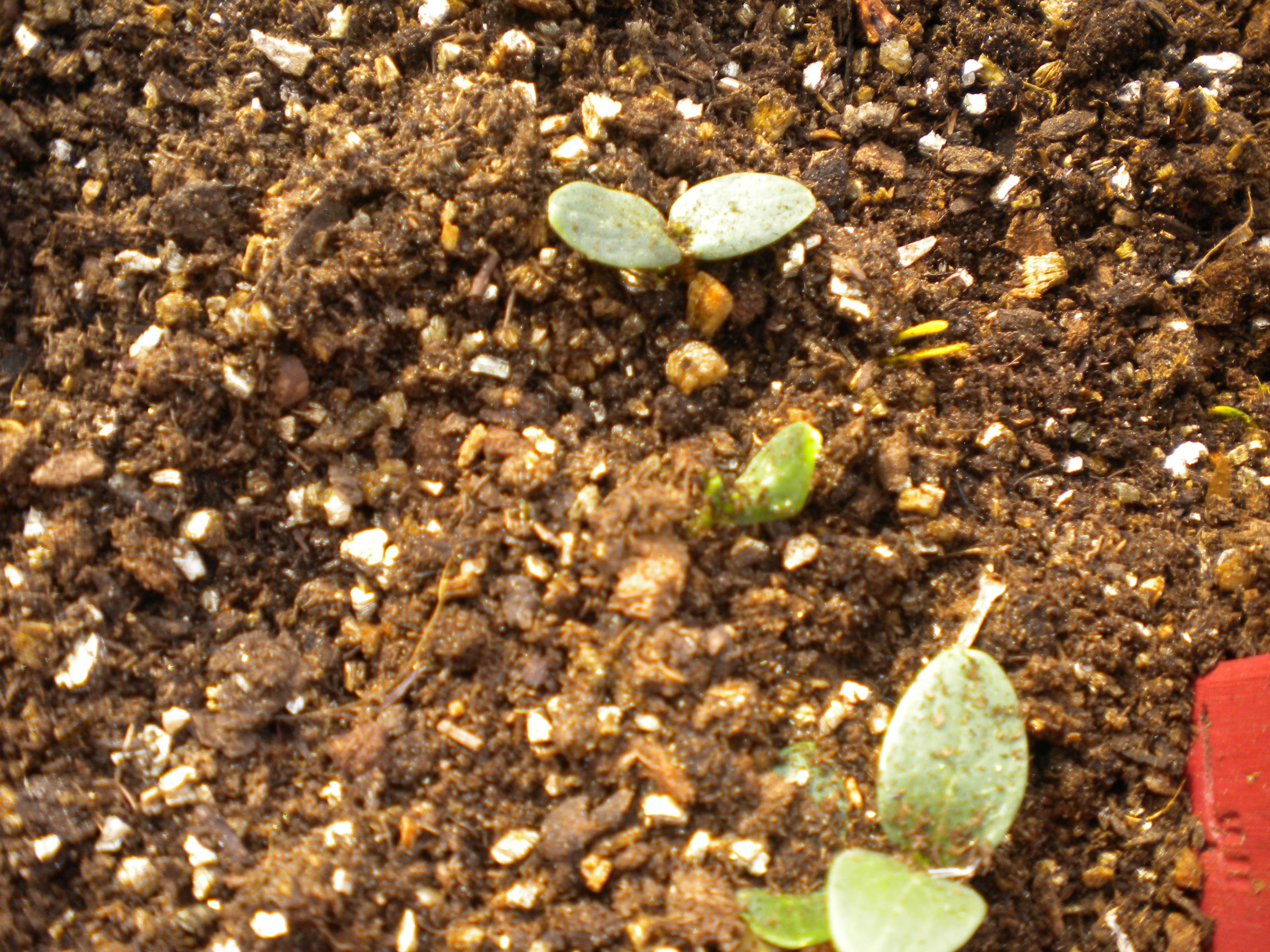 Square Foot Gardening—Part 4   Heart Of the Home